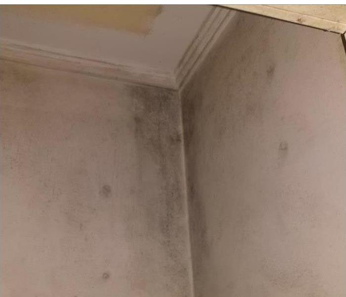 Mold Remediation Galesburg