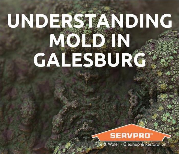 Mold Remediation Understanding Mold in Galesburg