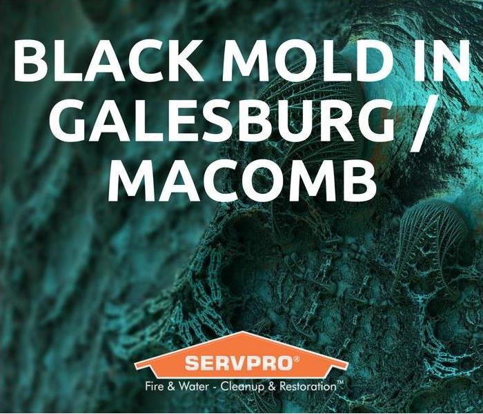 Mold Remediation Black Mold In Galesburg / Macomb
