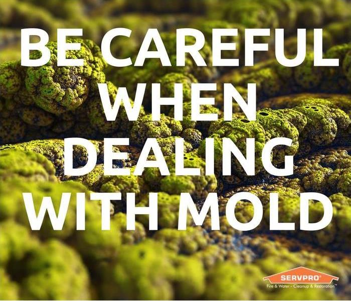 Mold Remediation Be Careful Around Mold